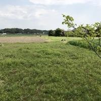 荒尾市牛水 売土地のサムネイル