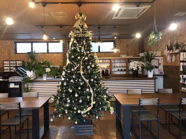 クリスマスツリー点灯! -大牟田市荒尾市の不動産売買専門-