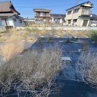 大牟田市草木 売土地のサムネイル