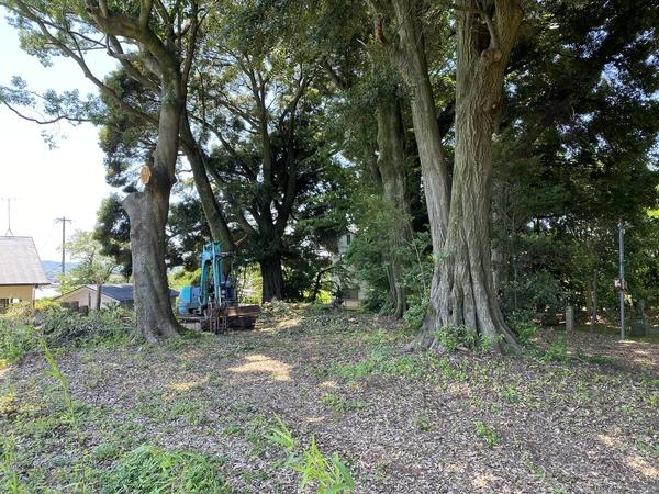 樹木伐採工事 -大牟田市荒尾市の不動産売買専門-